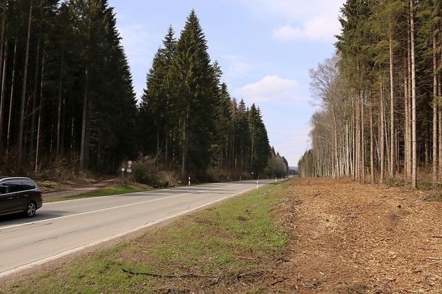 Ab Juni geht die Baustelle im Wald weiter
