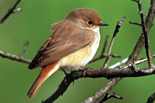 Vogelstimmen-Exkursion des NABU zwischen Nordschwaben und der Hohen Flum