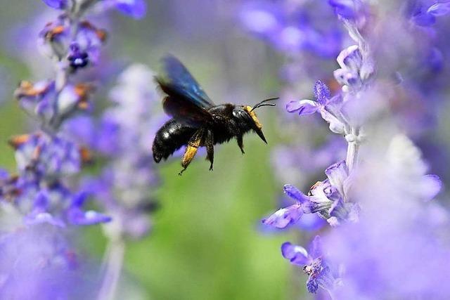 Kretschmann sieht Volksbegehren zum Schutz der Bienen zwiespältig