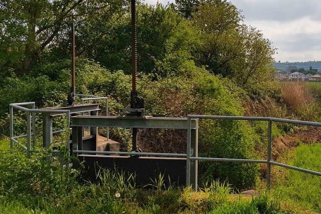 Beim Versickerungsbecken in Oberrimsingen müssen Bäume gefällt werden
