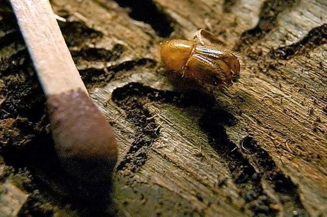 Sturm und Käfer bereiten Probleme