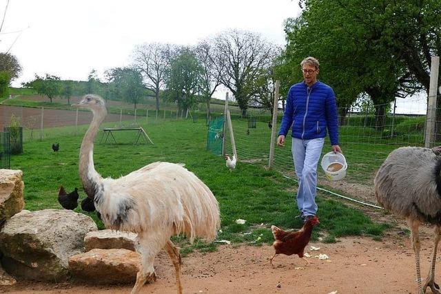 Geflügelzüchter hält Nandus als Bodyguards für seine Hühner