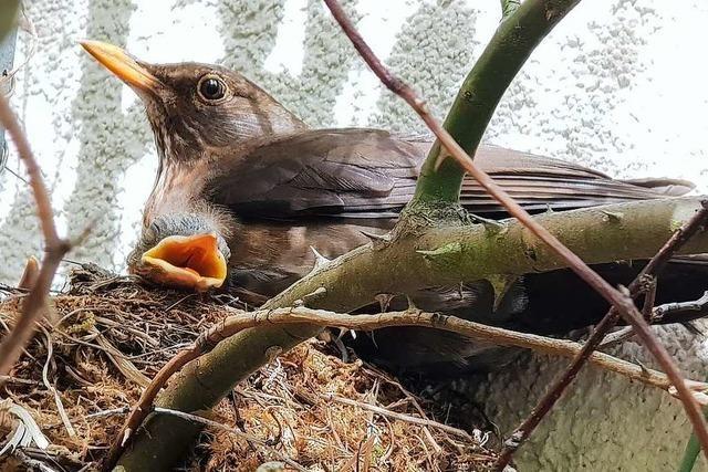 Am Wochenende werden in Freiburg wieder Vögel gezählt