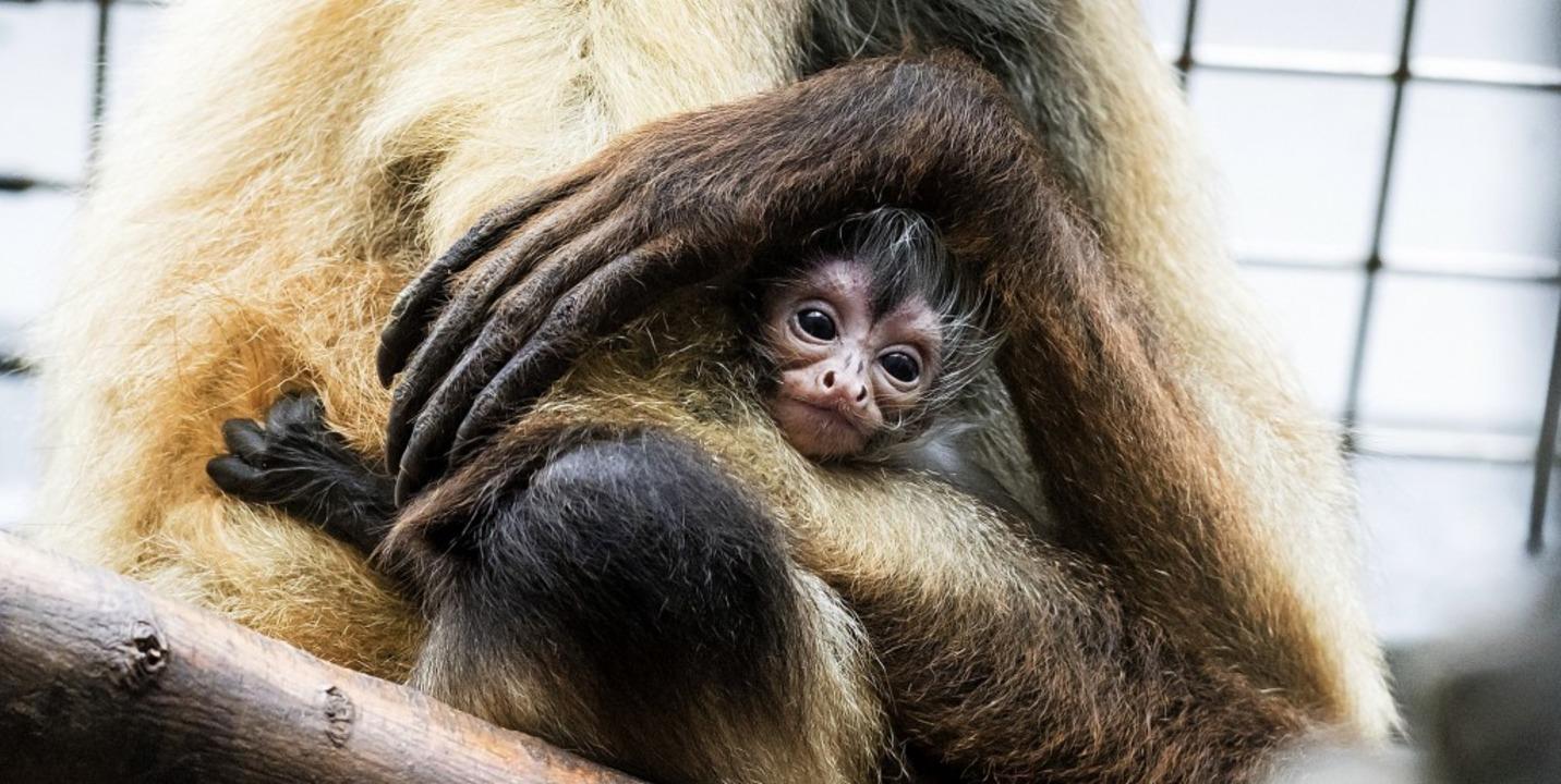 | Foto: Zoo Basel (Torben Weber)