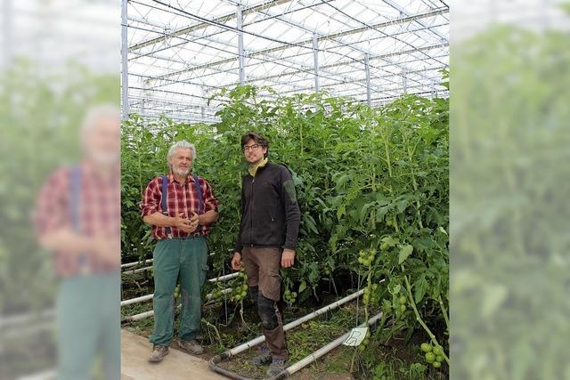 Einweihungsfeier inmitten üppig kletternder Tomaten