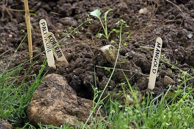 Gärtnern spielt im Unterricht eine immer größere Rolle