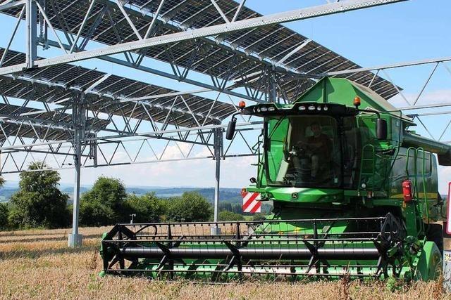 Unten Getreide, oben Solarzellen: Pilotprojekt auf Denzlinger Äckern