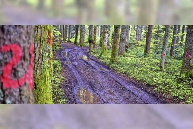 1258 Hektar Wald werden aufgeräumt