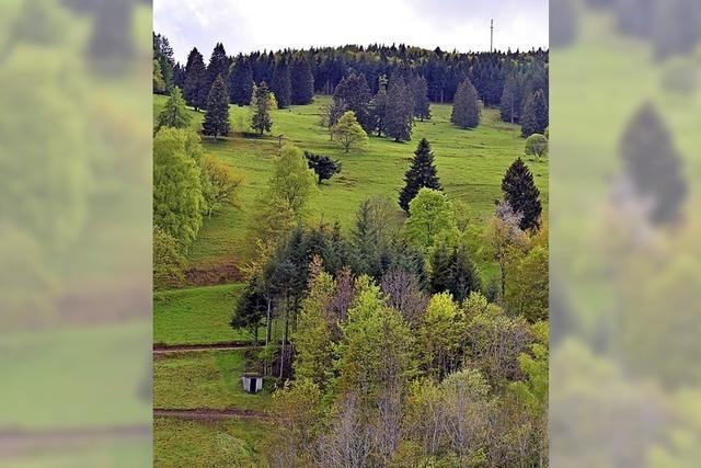 Quellen im Zeller Bergland bleiben trocken