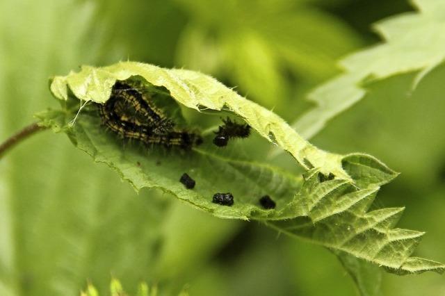Raupen werden Schmetterlinge