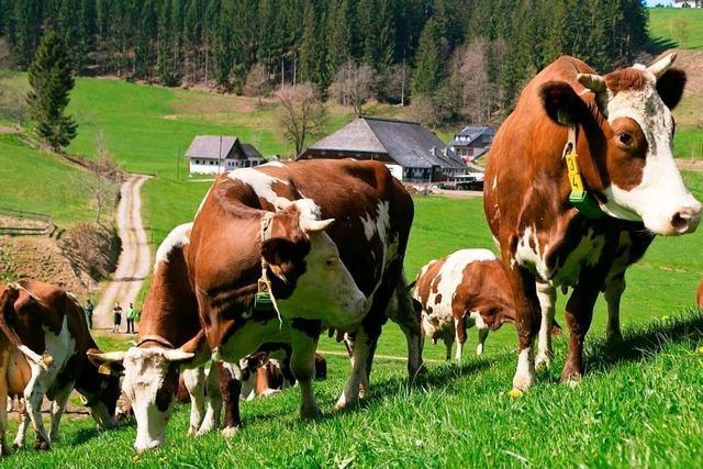 Schwarzwaldmilch baut Käserei in Titisee