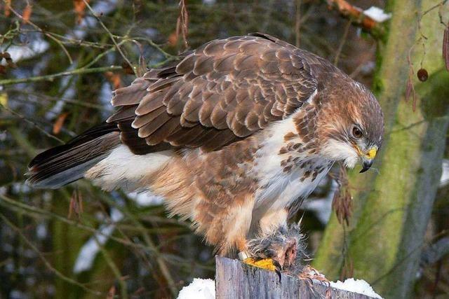 Vogelangriff in Lörrach: