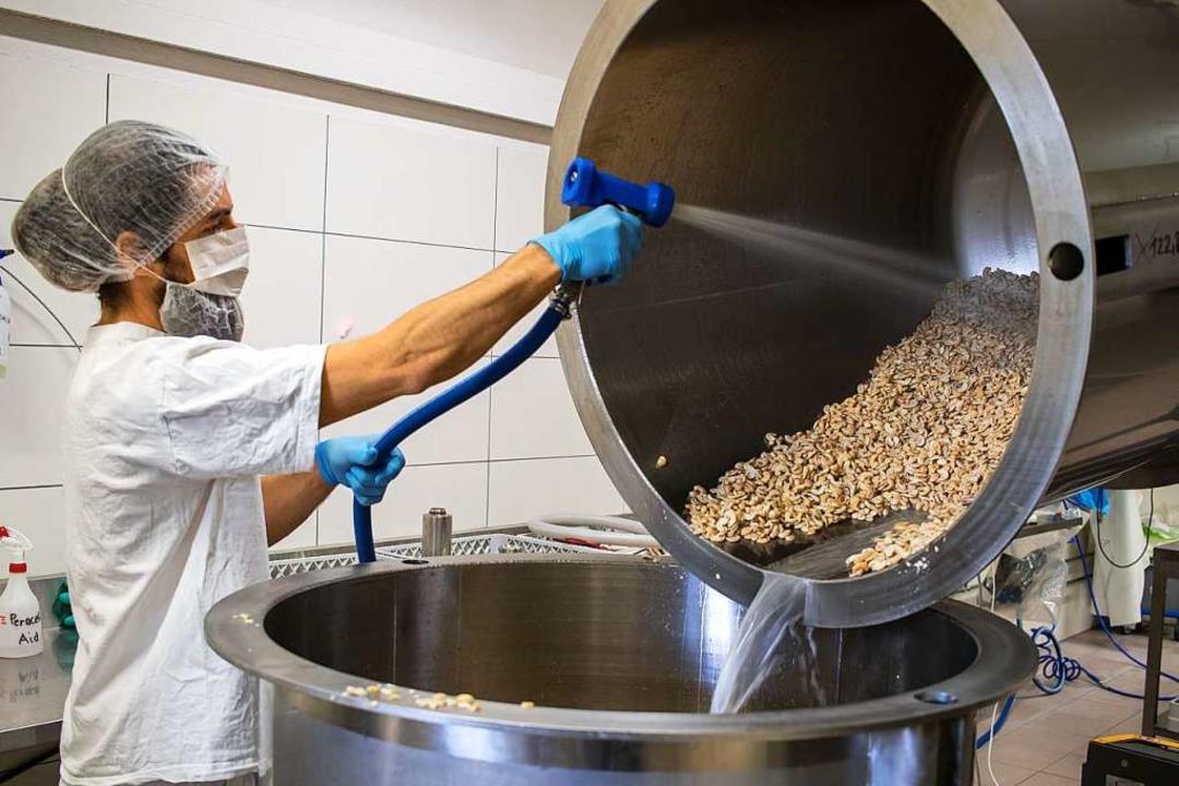 Ein Mitarbeiter reinigt die Nüsse, bevor sie weiterverarbeitet werden.    Foto: Charlotte Janz