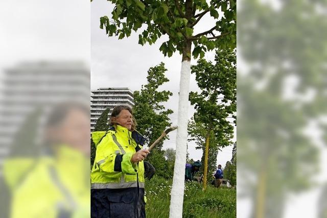 Bäume bekommen Sonnenschutz