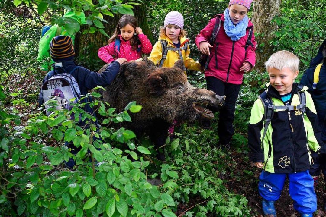 Begeistert schauen sich die Kinder die...n Wildschwein kommen sie  nicht so nah  | Foto: Thomas Kunz