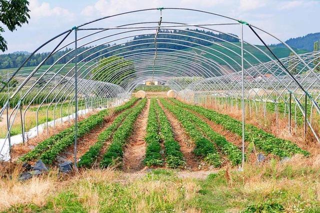Denzlinger BLHV-Landwirte wünschen sich mehr Wertschätzung