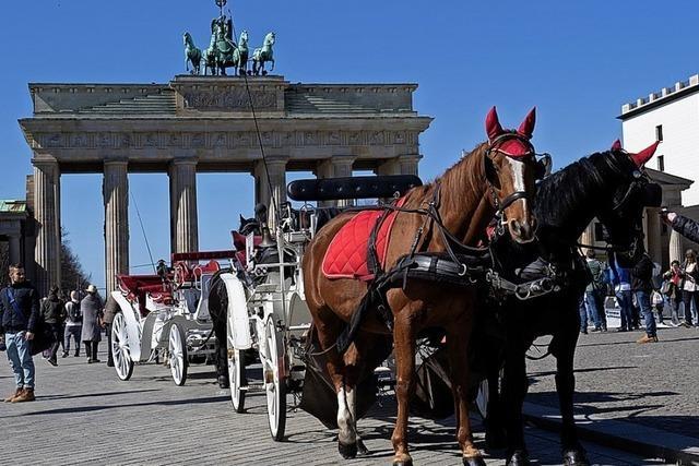 Hitzefrei für Berlins Touristen-Pferde