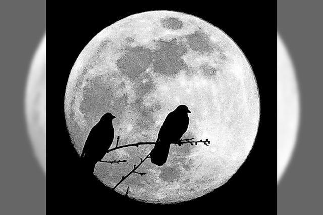 Auch der Mond bebt bisweilen