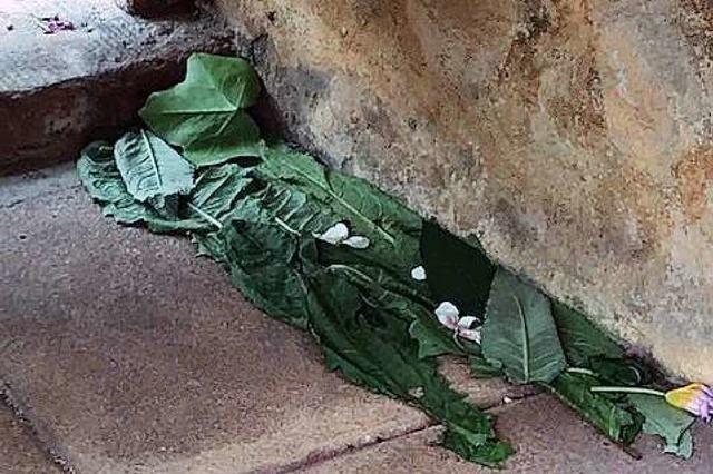 Unbekannte zertreten mutwillig Pflanzen