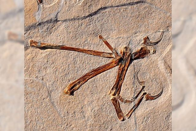 Weiterer flugfähiger Urvogel gefunden