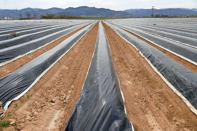 Naturschützer kritisieren Spargelanbau mit Folien