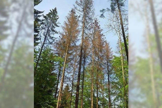 Todtmoos muss für Waldbewirtschaftung mehr zahlen