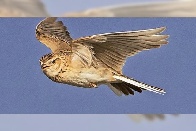 Vogel-Tag auf dem Feldberg