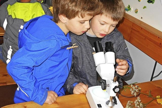 Kleine Forscher erkunden die Natur