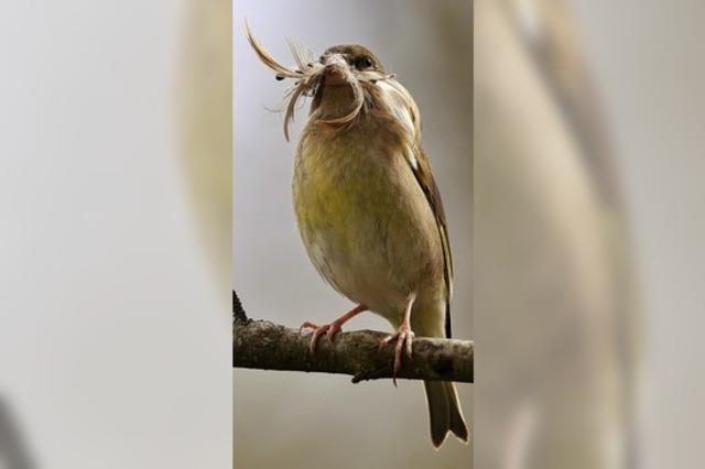 Federn für ein Nest