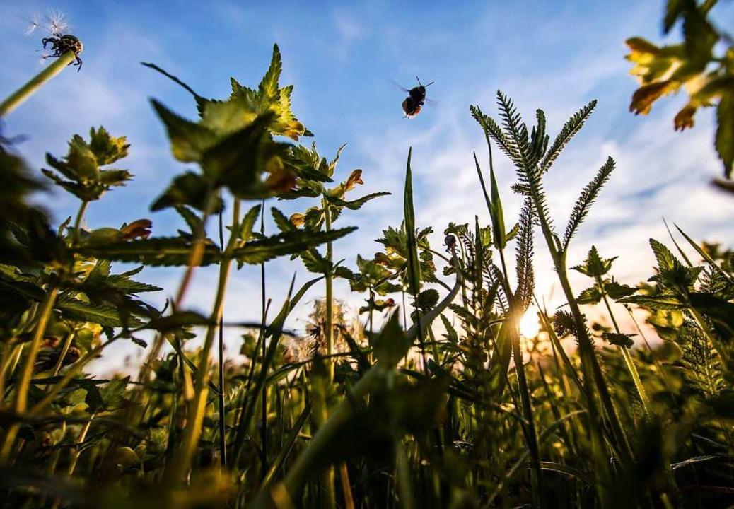 Ökologie und Nachhaltigkeit sind Theme...e beide Listen als Schwerpunkt nennen.  | Foto: dpa