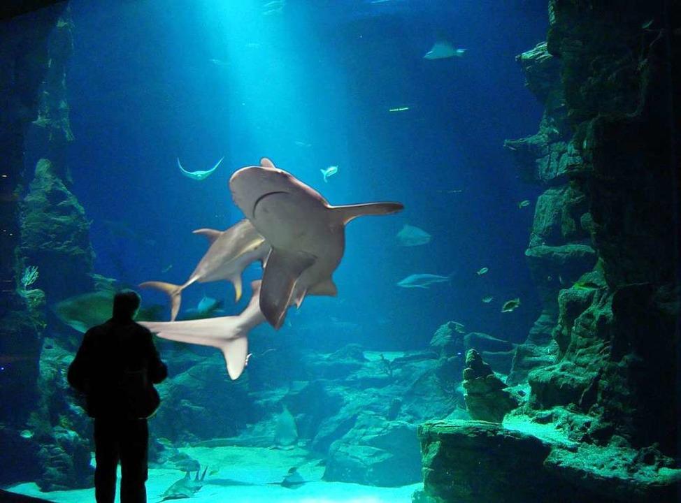 Was ist ein Ozeanium?  | Foto: Zoo Basel