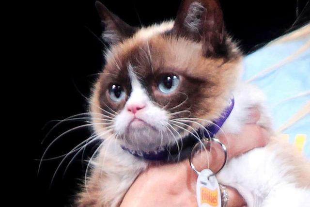 Internet-Kult-Katze Grumpy Cat ist tot