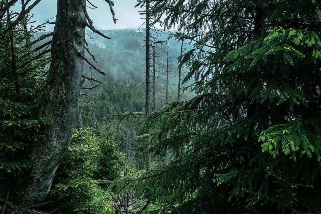 Die Natur soll machen, was sie will. D...gehört zur Kernzone des Nationalparks.  | Foto: Birgit-Cathrin Duval, Birgit-Cathrin Duval