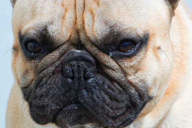 Hunde bringen Radlerin zu Fall