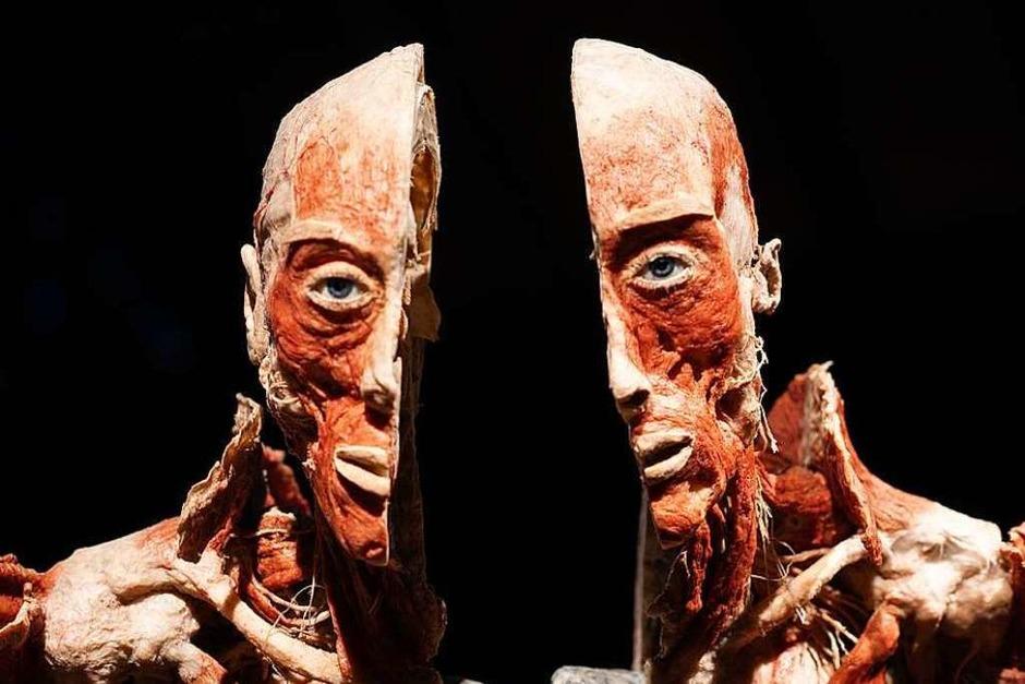 """Die Ausstellung """"Körperwelten"""" stellt den menschlichen Körper und seine Funktionsweise in den Mittelpunkt. (Foto: Fabian Rudolph)"""