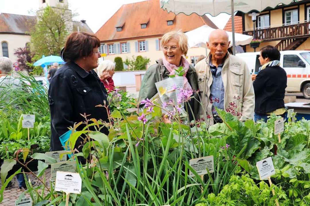 Frische Kräuterpflanzen machten Lust auf den Frühling.  | Foto: Christa Rinklin