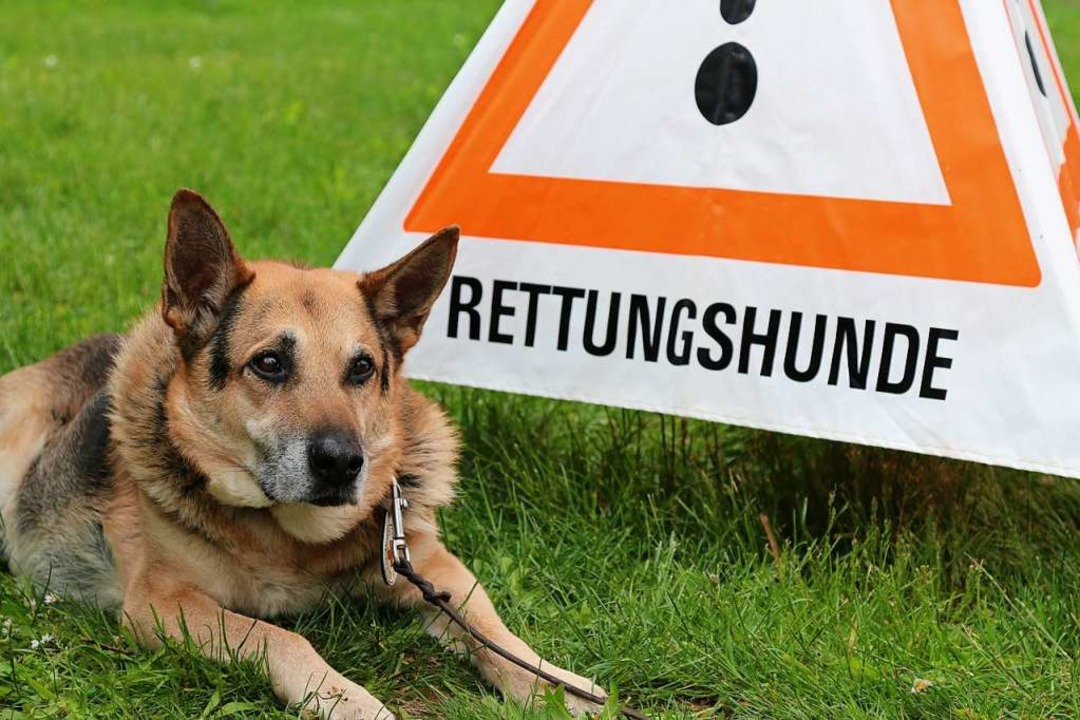Rettungshunde waren auch zum Streicheln da.  | Foto: Katharina Kubon