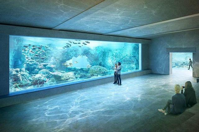 Die Enttäuschung über das Nein zum Ozeanium ist beim Zoo Basel gewaltig
