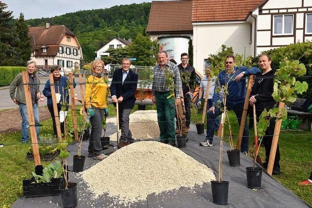 Aus eingesparten Plastiktüten wächst in Rheinfelden ein Weinberg