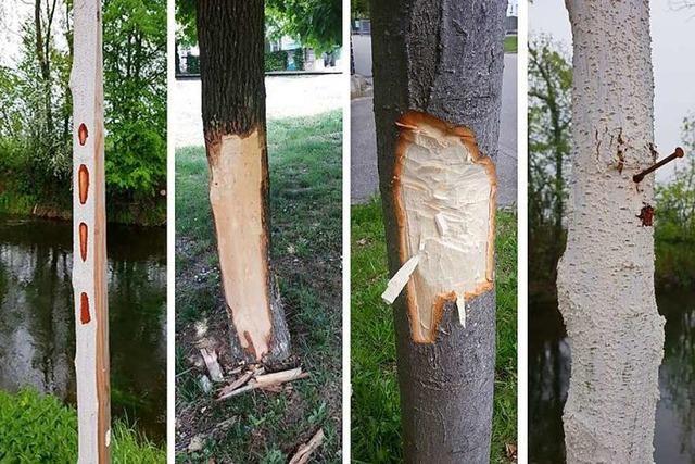 Unbekannte beschädigen Bäume durch rohe Gewalt