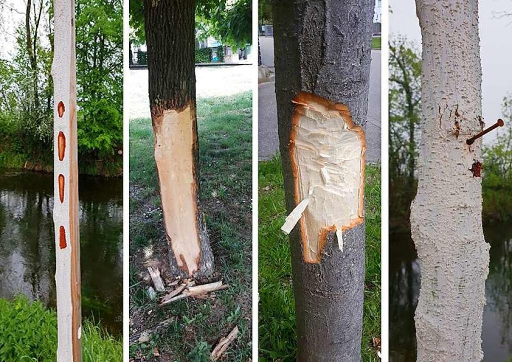 Beschädigte Bäume in Offenburg    Foto: Polizeipräsidium Offenburg