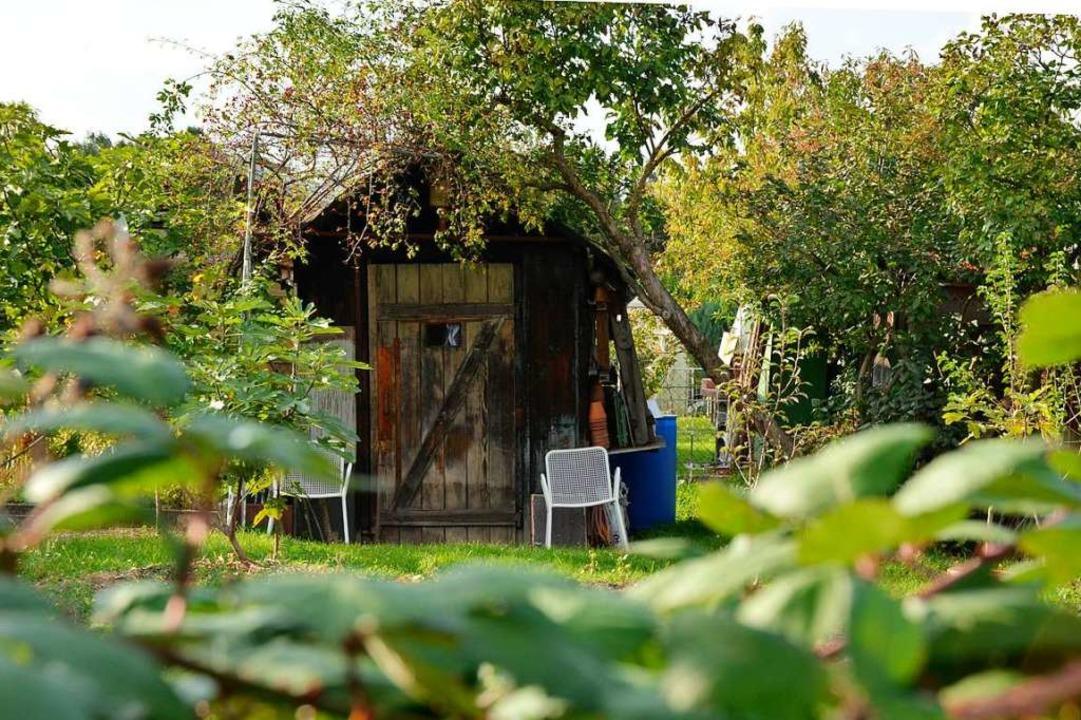 Kleingarten oder Wohnraum?  | Foto: Julia Dreier