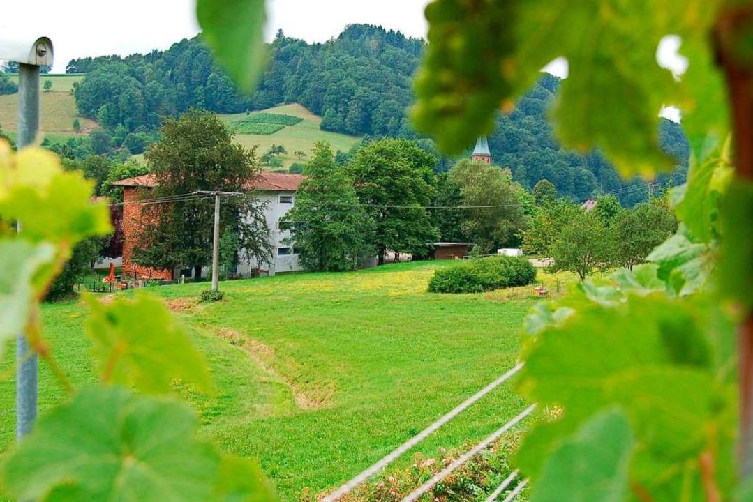 Auf der Wiese hinter der Schurhammersc...as Mehrgenerationenhaus gebaut werden.  | Foto: Christian Ringwald