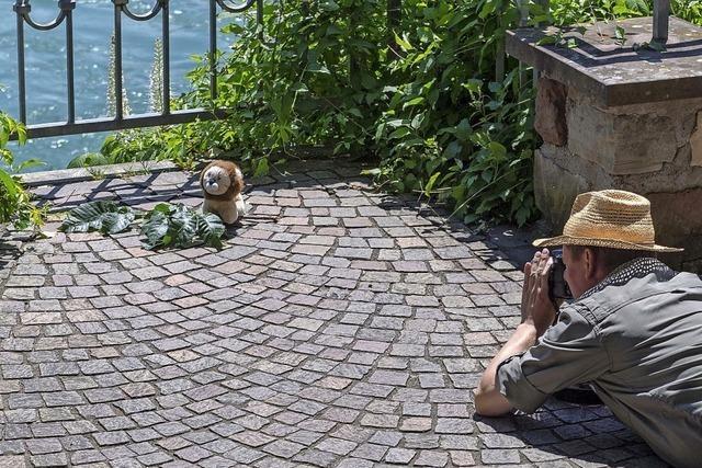 Fotomarathon Rheinfelden geht in die vierte Runde
