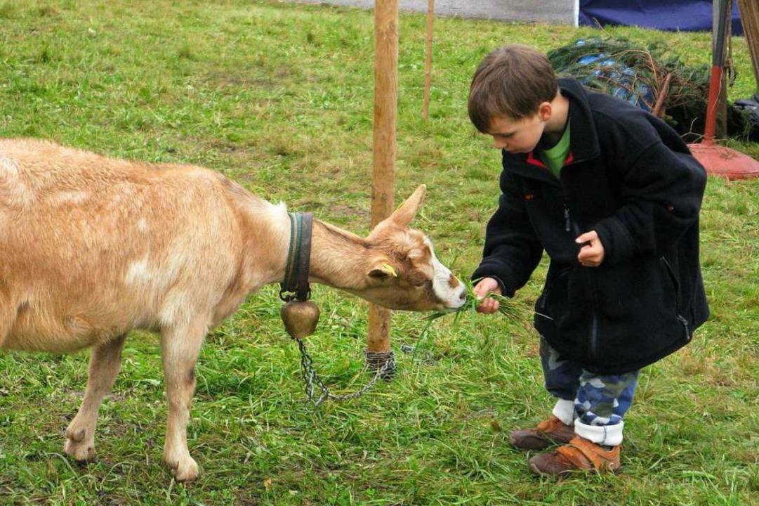 Auch beim dritten Biosphärenfest gibt es echte Tiere zu sehen.    Foto: Ulrike Spiegelhalter