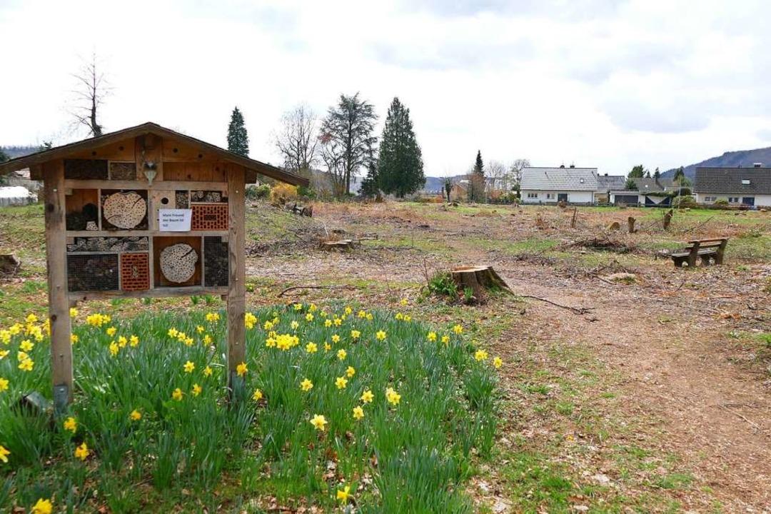 Stephan Denk möchte den Brennet-Park für eine Erbpacht zur Verfügung stellen.  | Foto: Sarah Trinler