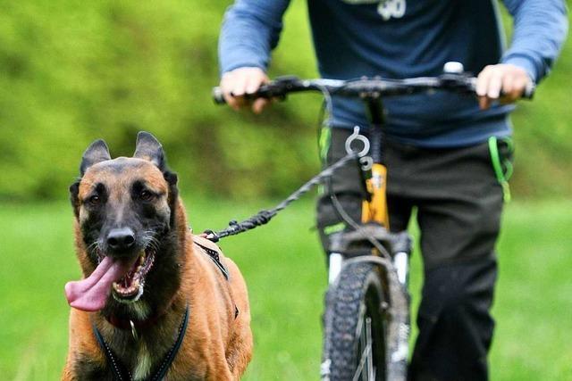 Dogscooting – wenn der Hund das Herrchen zieht