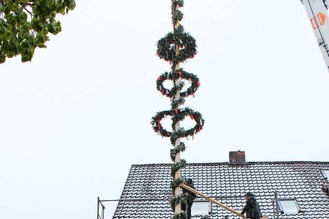 In Oberried werden nach einem alten Brauch Wirtsbäume vor Gaststätten aufgestellt
