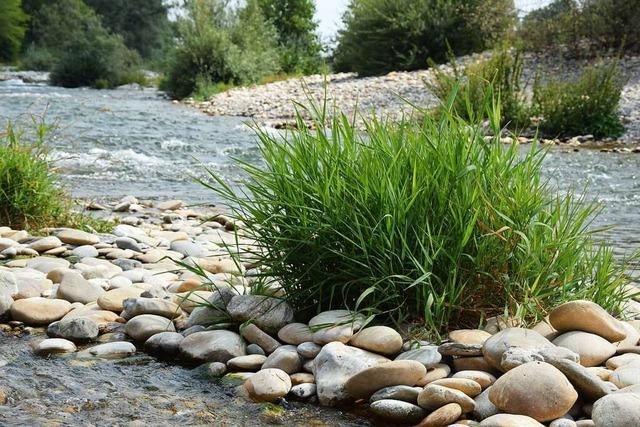 Auf zum Fluss: Picknick an den Isteiner Schwellen