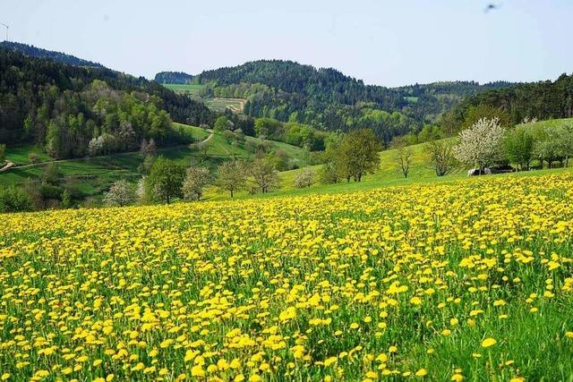 Diese Frühlingswanderung führt rund um Schweighausen im Schuttertal